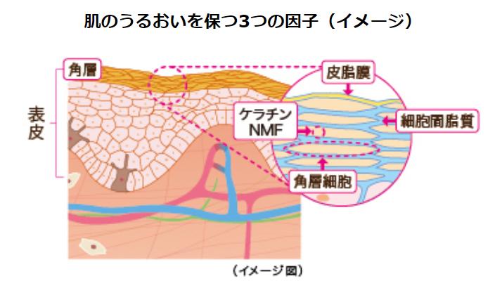 肌のうるおいを保つ3つの因子